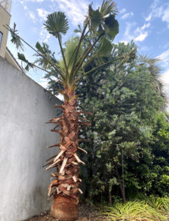 PLANT & Exterior